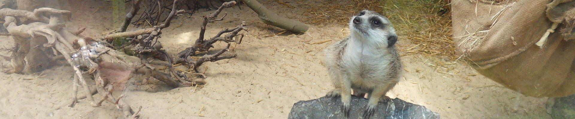 Kategorie: Tierpark Nadermann